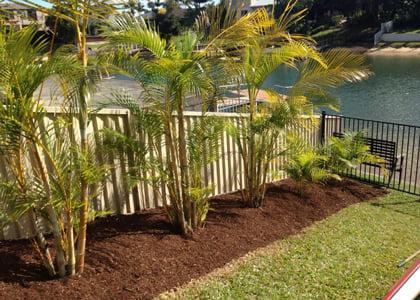 Mulching & pruning service