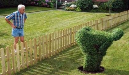 angry hedge