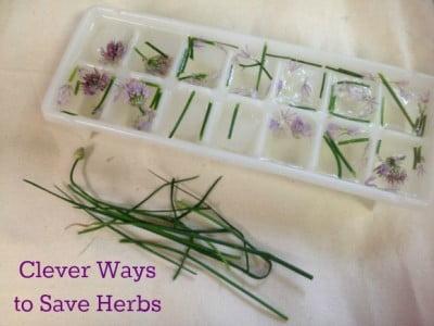 herbs frozen