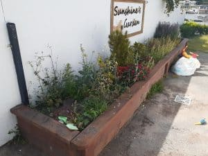 Sunshine Garden before the clean up