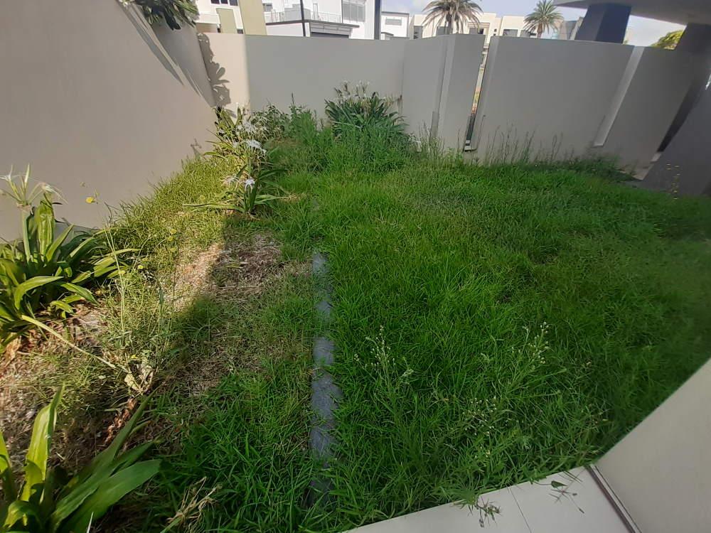 weeds in backyard