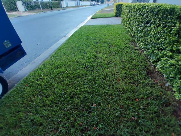street lawn 2