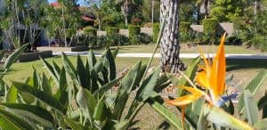 Garden Fertilising
