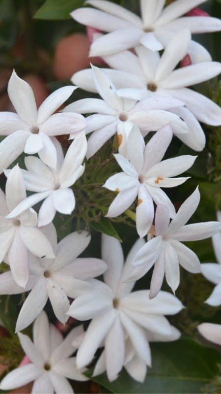 Low allergy gardens